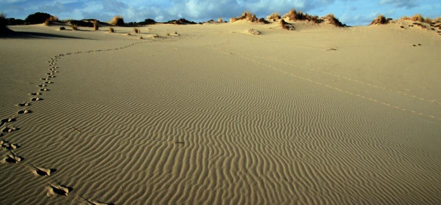 Arbus, tracce di cervo sardo sulle dune di Piscinas - foto D.Ruiu su SardegnaDigitalLibrary