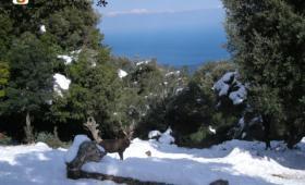 Urzulei, Cervo nella neve, sullo sfondo il mare di Cala Luna