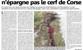 L'acte de braconnage n'épargne pas le cerf de Corse