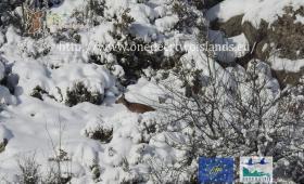 Cervo nella neve (PNRC)