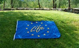 life_bandiera