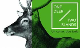 one deer  - two islands