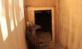 Il tunnel nel recinto di cattura